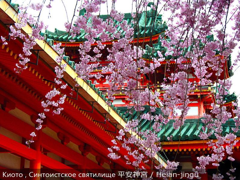 Сакура. Сакура в Киото